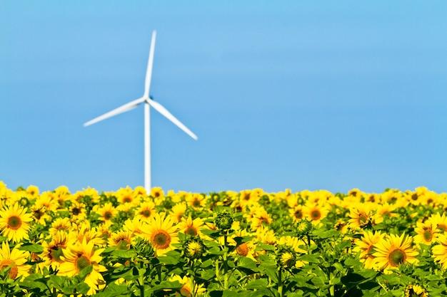 Windmühlen und sonnenblumen
