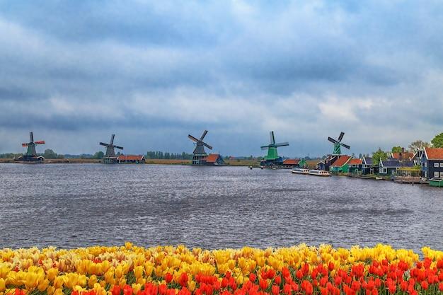 Windmühlen von zaanse schans ruhigem dorf in den niederlanden