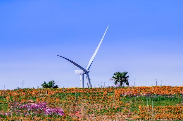 Windturbine hinter den blumenhügeln.