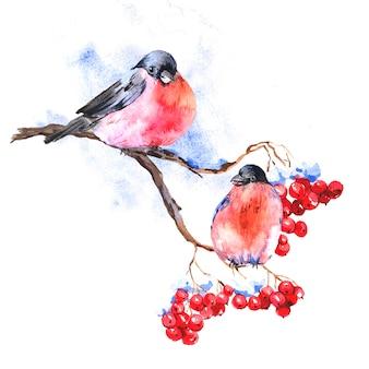 Winter-aquarellhintergrund mit dompfaffen