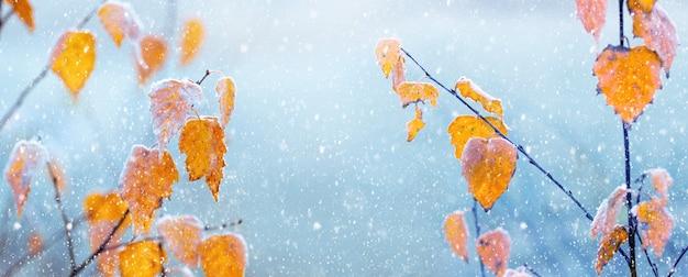 Winter atmosphärischer hintergrund. trockene gelbe birkenblätter an einem baum auf einem sanften hellblauen hintergrund während eines schneefalls