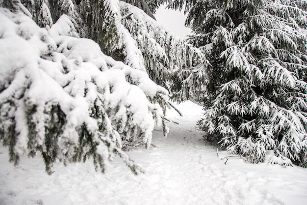Winter berglandschaft. berge im schnee. der erste schnee in den bergen. erster frost in den karpatenbergen. hohe weihnachtsbäume unter starken schneefällen