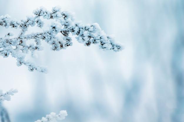 Winter, ein mit raureif bedeckter zweig einer trockenen pflanze, an der richtigen freien stelle, ein symbol für ausdauer und ausdauer