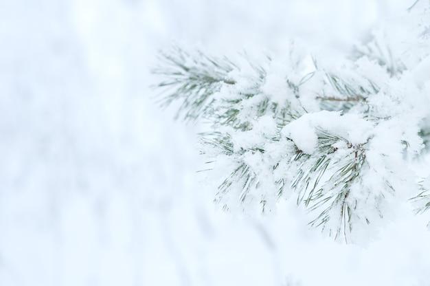 Winter. ein nadelbaum in raureif und schnee