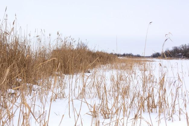 Winter, feld mit dem trockenen gras bedeckt mit weißem schnee