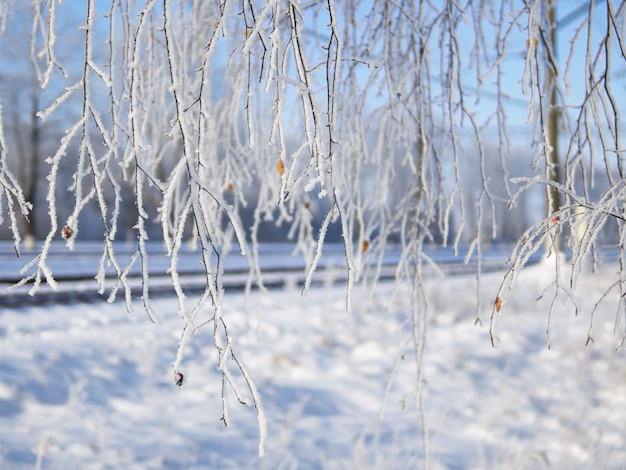 Winter hintergrund. die zweige des baumes im frost
