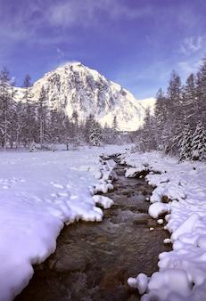 Winter im aktru-tal ein gebirgsfluss mit schneebedeckten ufern hohe tannen