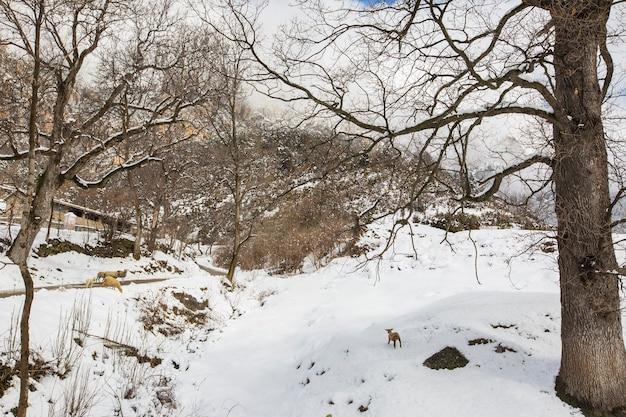 Winter in bergueda bergen, barcelona, pyrenäen, spanien