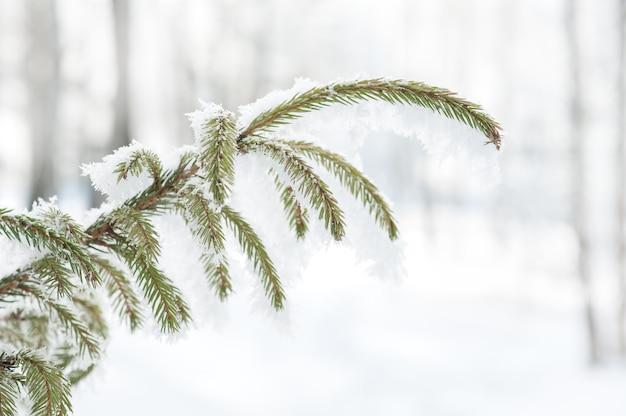 Winter mit tannenzweigen im frost. Premium Fotos