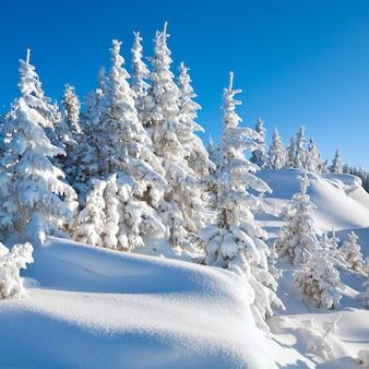 Winter ruhige berglandschaft mit schönen tannen am hang (kukol mount, karpaten, ukraine)