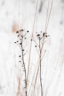 Winter ruhige stimmung. trockene wildblumen und schnee. vertikale perspektive. natürlicher hintergrund. minimalistisches naturkonzept