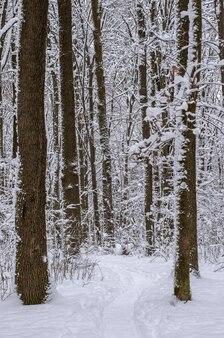 Winter schneebedeckte bäume
