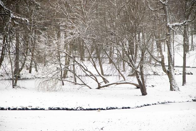 Winter schneebedeckte parkähnliche landschaft. winterlandschaft. starker schneefall im park. erster schnee.