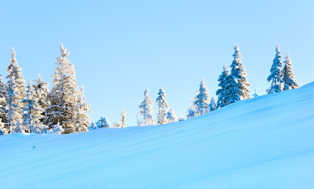 Winter schneebedeckte tannen am berghang am blauen himmelshintergrund (karpaten, ukraine)