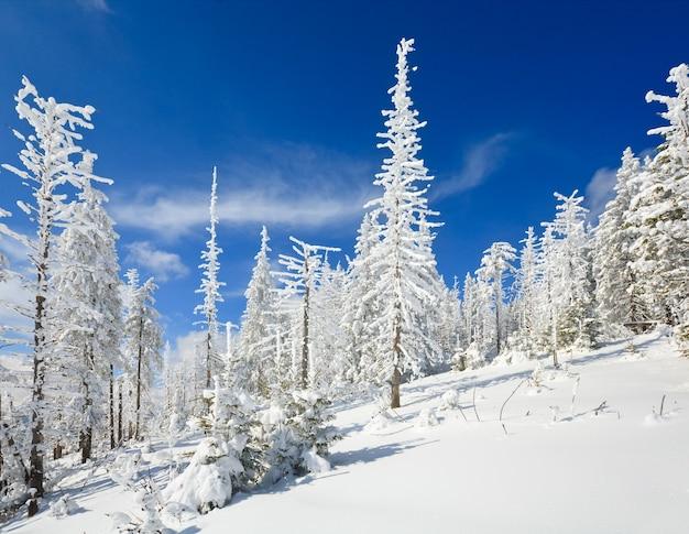 Winter schneebedeckte tannen am berghang auf blauem himmelshintergrund