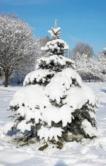 Winter schneebedeckter nadelbaum im stadtpark