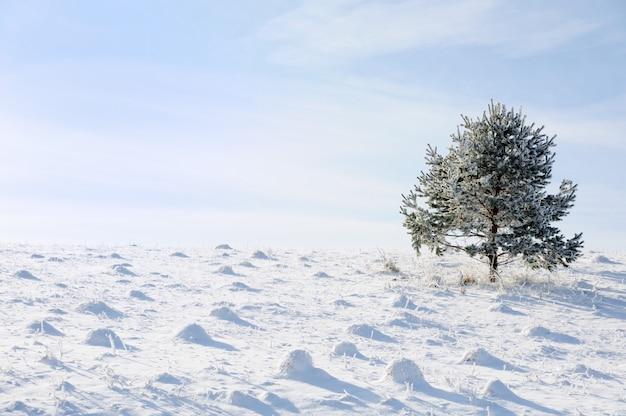 Winter- und schneeszene, baum allein