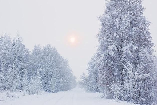 Winter verschneite bewölkte landschaft mit bäumen