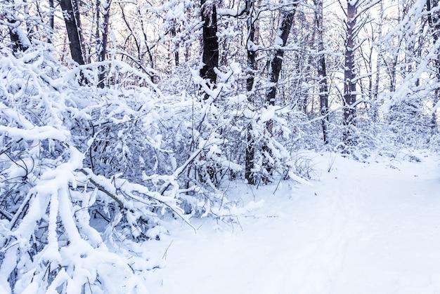 Winter zweige