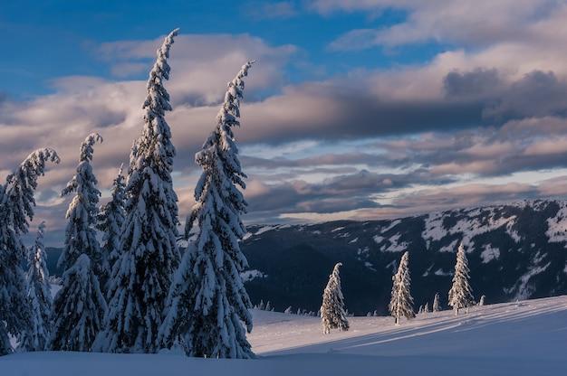 Winterabend in den bergen, alle bäume mit weißem schnee bedeckt, weihnachtslandschaft
