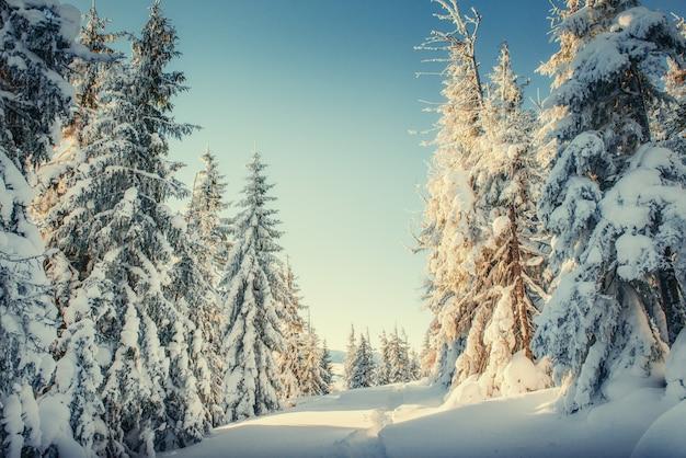 Winterbaum im schnee. karpaten. ukraine. europa.