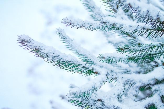 Winterbaum in der parkoberfläche