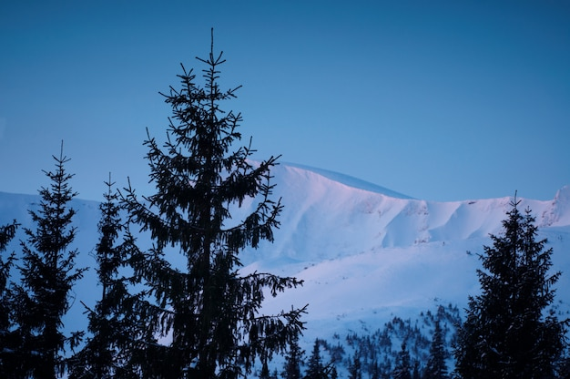 Winterberge und tannen über wolken bei sonnenaufgang