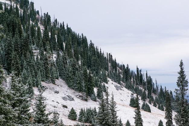 Winterberglandschaft mit pinien