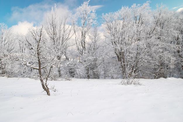 Wintereiswald