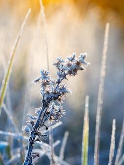 Winterfrostiger abstrakter natürlicher hintergrund