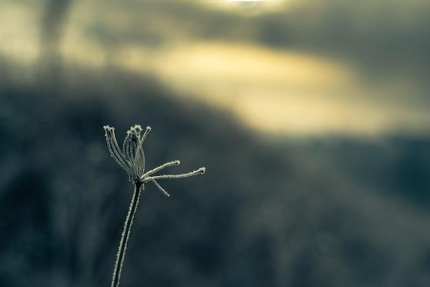 Winterhintergrund des gefrosteten grases, erster frost im dezember