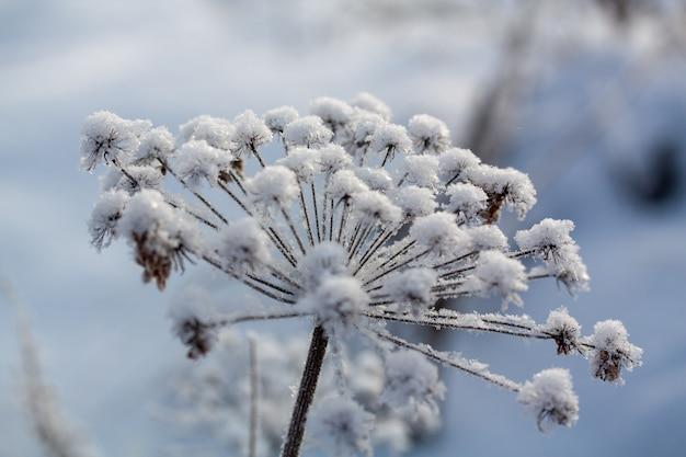 Winterhintergrund, morgenfrost auf dem gras im eis