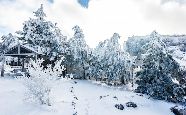 Winterlandschaft auf einem berggipfel mit schneebedeckten bäumen