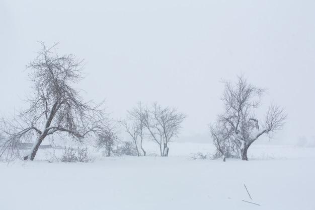 Winterlandschaft. bäume ohne laub auf einem gebiet bedeckt mit schnee.