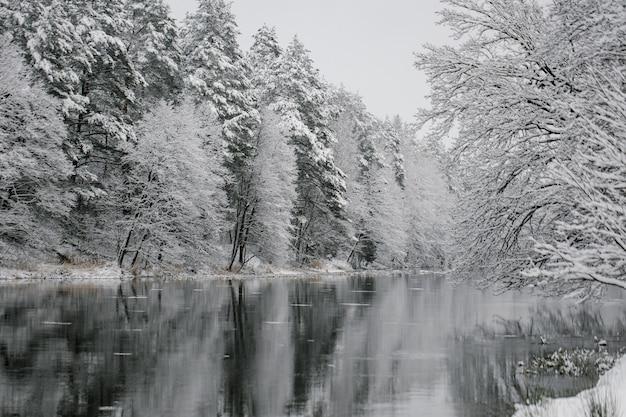 Winterlandschaft der bäume am rande des flusses