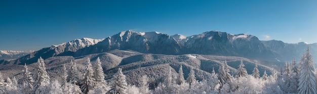 Winterlandschaft der karpatenberge. schneebedeckte tannen, blauer und klarer himmel nach sonnenaufgang. rumänien