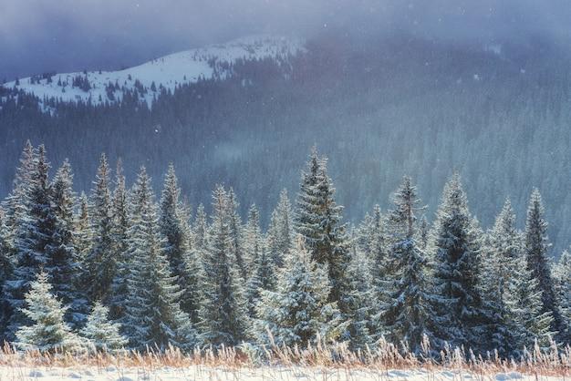 Winterlandschaft, die durch sonnenlicht glüht.