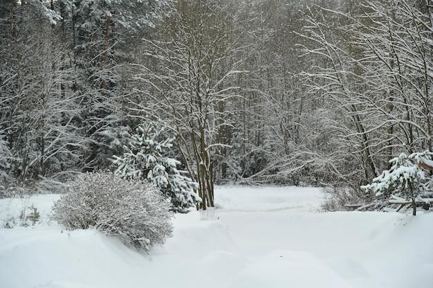 Winterlandschaft eines gebirgsflusses im schnee, um den wald