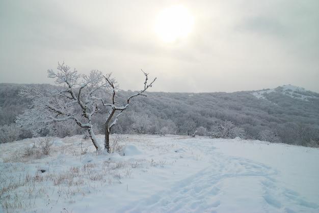 Winterlandschaft - eisiger wald mit schönen bäumen