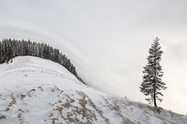 Winterlandschaft. hohe kiefer allein auf berghang am kalten sonnigen tag auf kopienraum des blauen himmels und des fichtenwaldes.