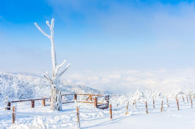 Winterlandschaft in den bergen mit fallendem schnee in seoul, südkorea.