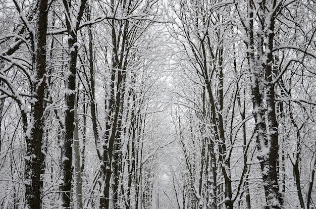 Winterlandschaft in einem schneebedeckten park nach starkem nassen schneefall. eine dicke schneeschicht liegt auf den ästen der bäume