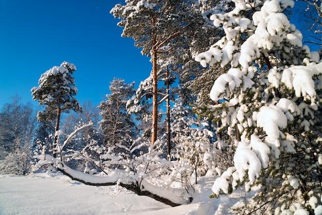 Winterlandschaft in einem schneebedeckten wald