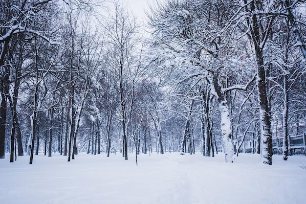 Winterlandschaft in einem stadtpark an einem verschneiten tag