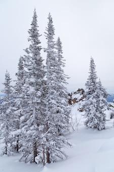 Winterlandschaft mit baum und schnee. schneebedeckte bäume an berghängen.