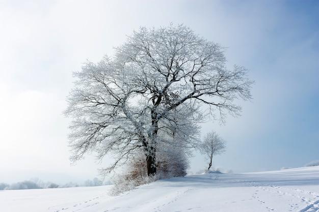 Winterlandschaft mit einem großen einsamen eisigen baum an einem bewölkten eisigen tag. die große krone des baumes ist mit raureif bedeckt. das konzept der konfrontation. nahansicht