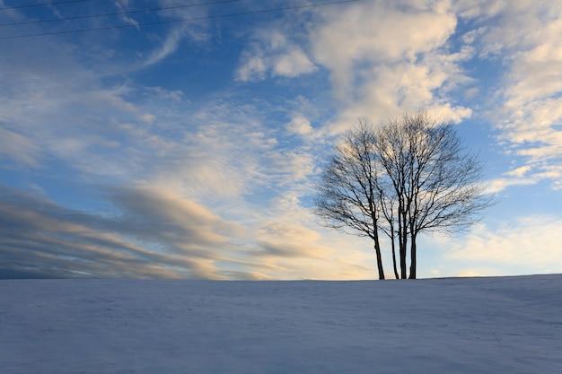Winterlandschaft mit einem isolierten baum über den italienischen alpen des blauen himmels