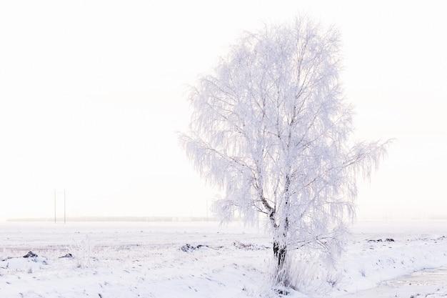 Winterlandschaft mit einer einsamen birke im reif