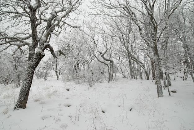 Winterlandschaft mit eisigen bäumen.