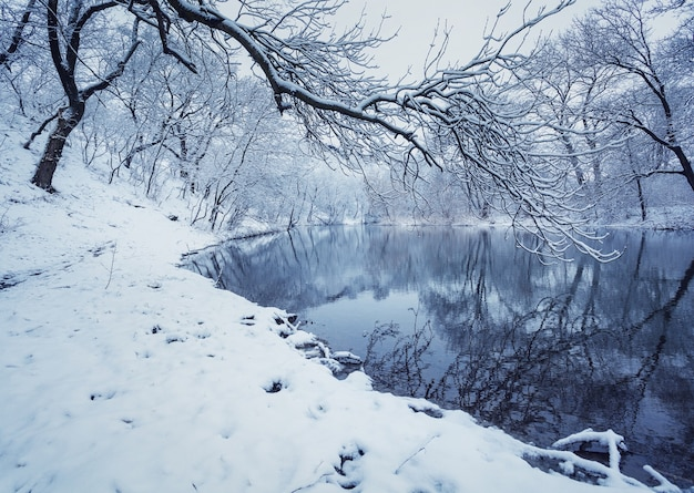 Winterlandschaft mit fluss im wald